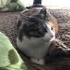 【愛猫日記】毎日アンヌさん#93