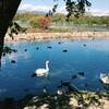 昆陽池公園を一周してみる