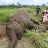 スリランカ ゾウの死亡件数の8割が人による殺害 観光目的の虐待も続く