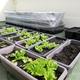 家庭菜園で使うプランターが豪雨や台風で全滅する前にできること