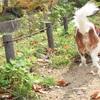 [犬散歩] 夙川 お散歩 紅葉