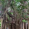 Singapore Botanic Gardens/運良く月1回の日本語ガイドツアーに参加できた【シンガポール紀行9】