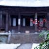 京都・大原 - コントラスト美しい初雪の勝林院
