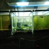 水中ポンプ式スポンジフィルター水槽立ち上げ1日(生態紹介)