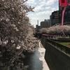 目黒川の桜並木 傷ついた心に染みわたる美しい景色・・。