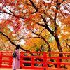 京都へ引越すことになりました