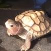 2020 1st Reptiles ガレージセール in 練馬