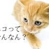 犬派と猫派の不毛な争いに終止符を 〜猫派の気が知れない〜