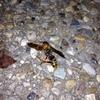 アシナガバチの巣を除去