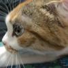 猫の日なので、我が家の猫さんと出逢った時のお話し。
