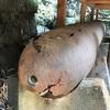 小田原の神社で朽ち果てていく 戦争の生き証人(小田原市)