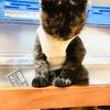 【第2弾】実家の家族・猫ちゃんとちょこちゃんを対面させてみた。