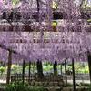 2021-04-27 津島市天王川公園の藤を見る