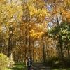 メタセコイア in 水元公園