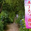 妙手回春の漢方薬でFSH59→FSH9に。山形市の出塩文殊堂の紫陽花