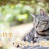 【癒され特集】猫の街へいざ行かん~尾道編~