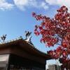 宇治にも錦秋の季節がやってきました。
