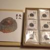 仙川 和菓子 「藤屋」