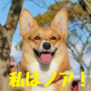 """コーギーの""""ノアちゃん""""ってどんな子?"""