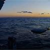 沈没船に群がる 巨大魚続出