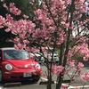 ◆青い空!白い雲!でも花が世界で一番美しいと思うのは自分だけでしょうか?写真が沢山あるよ♪◆