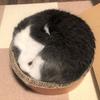 収まりすぎな猫