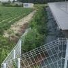 【太陽光発電】隣が畑は除草剤撒けない!