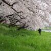 桜の記憶 #4