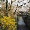人の流れに任せて川沿いの桜並木、哲学の道をぷらぷらと、とお食事スポット【2019年・京の桜】