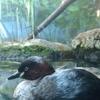 井の頭自然文化園 水生物園