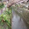 桜かおる京都へ♪
