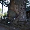 寄り道編〜「根古屋神社の大ケヤキ」と「比志のエゾエノキ」