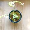 我が家の珍奇植物たち