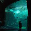 新江ノ島水族館 と 神奈川県立生命の星・地球博物館
