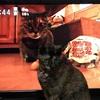 ハル、早朝からテレビの猫に大興奮