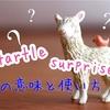 「驚く」startle と surpriseの使い分け