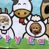 【春が来た!】去年の桜は・・・エマリハビリ中!~成田ゆめ牧場