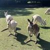 【パース】カバシャムワイルドライフパーク(動物園)と人生最大のピンチ!