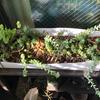 多肉植物 二軍ファーム