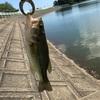 ラトリンラパラ 雄蛇ヶ池 釣ーリング プロトラスト バーサタイルスティック 釣りツーリング