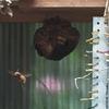 磐田市で蜂の巣駆除をしてきました
