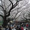 東京の都心でお花見をするなら今年はここが穴場5選!見頃の時期と食事の情報も合わせて紹介【2017年度版】