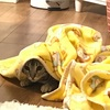 タオルを投げられた猫