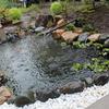今朝の朱文金(金魚)池と黒松盆栽素材