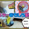 【YouTube 投稿】🐹 ハムスターおもしろ動画集#1 🐹 It's a funny video of a hamster #1