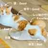 【猫学】猫の撫で方講座。愛猫の撫でられて嬉しい場所とタイミングの把握が重要!