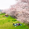 金沢へ - vol.7 - お花見 犀川緑地