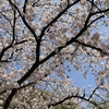 桜の季節に、読んだ本「首都感染」