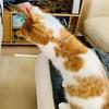 る「間食ダメ!」愛猫がダイエット指導をしてくれました。