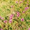 ☆謎のピンクのお花☆